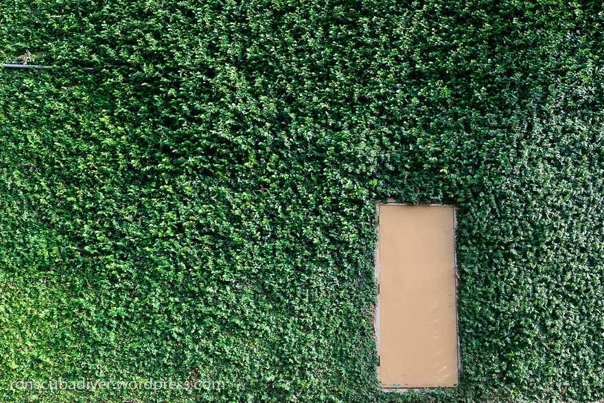Door in a Green Wall