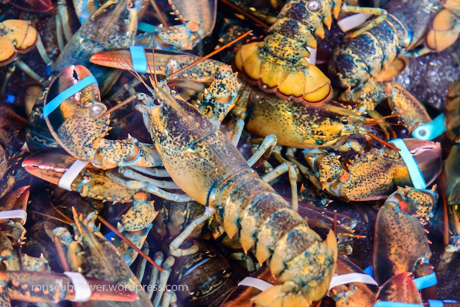 Wholesale Lobsters