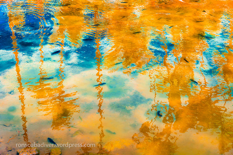 Fish Pond Abstract