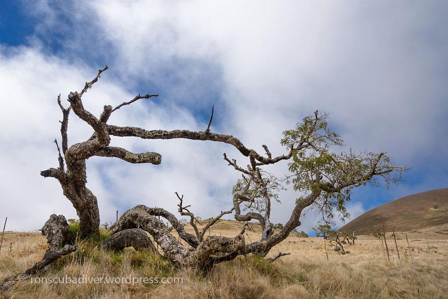 Wilting Tree